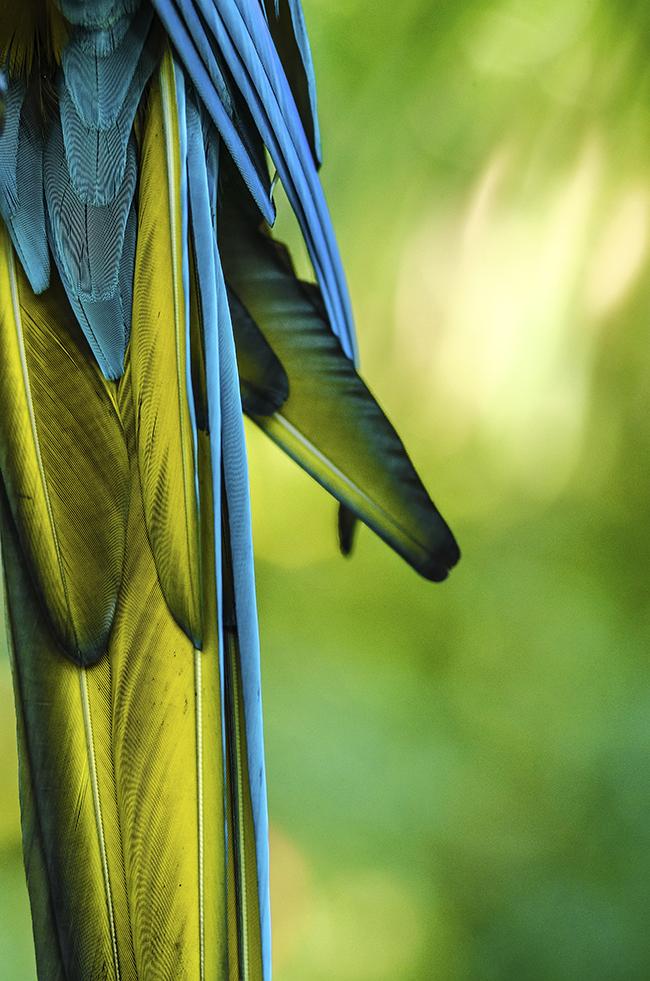 Ardastra Gardens_Parrots