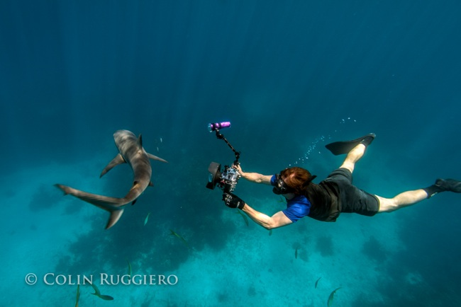 Colin Ruggiero_Filming Sharks Bahamas
