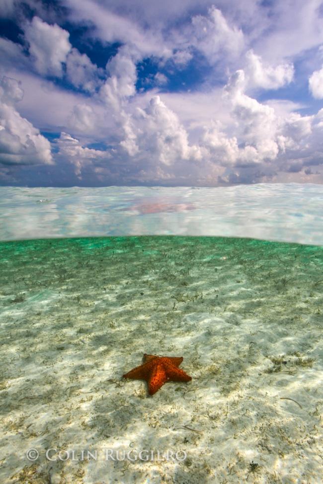 ColinRuggiero_Underwater Photography