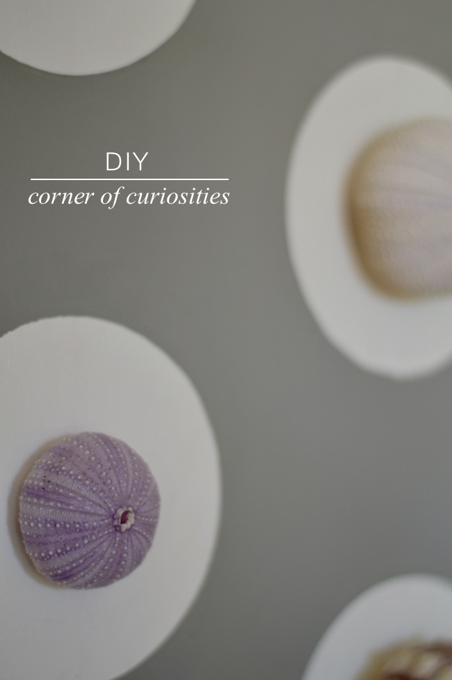 DIY Corner Of Curiosities
